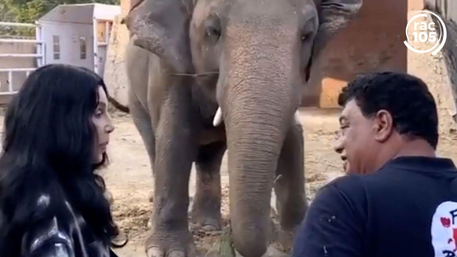 Cher ajuda a traslladar un elefant solitari